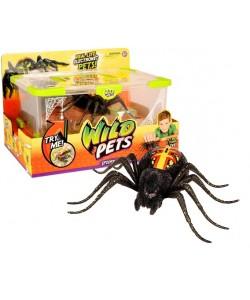 COBI WILD PETS Pavouk v teráriu